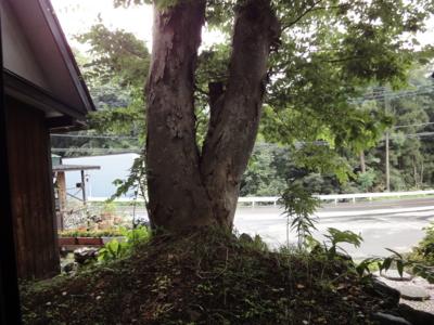 f:id:hatekota810:20100910192029j:image