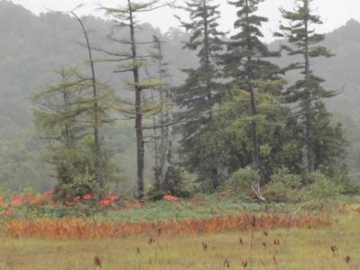 f:id:hatekota810:20100928193827j:image