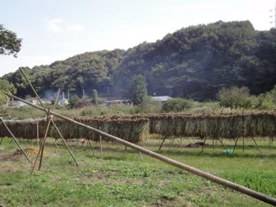 f:id:hatekota810:20101019194510j:image