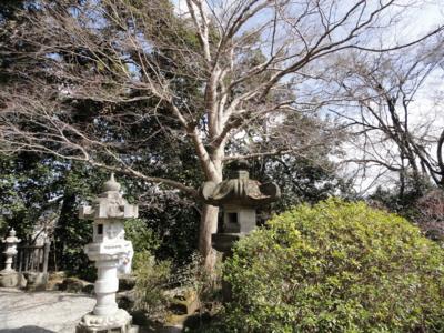 f:id:hatekota810:20110621193005j:image