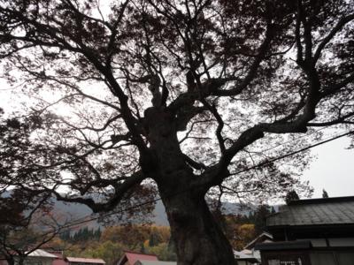 f:id:hatekota810:20111112071258j:image
