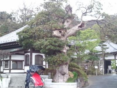 f:id:hatekota810:20111208200443j:image