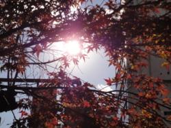 f:id:hatekota810:20111226190124j:image