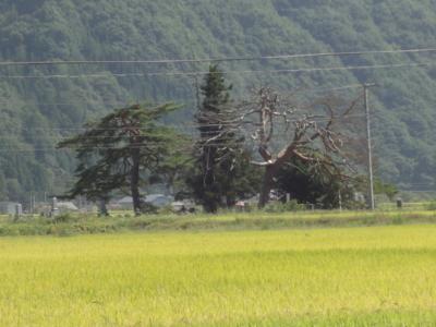 f:id:hatekota810:20120910173328j:image