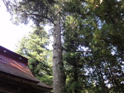 f:id:hatekota810:20120913200232j:image