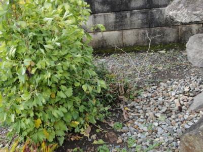 f:id:hatekota810:20121115195847j:image