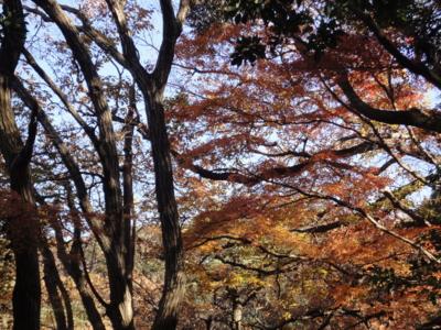 f:id:hatekota810:20121225194159j:image