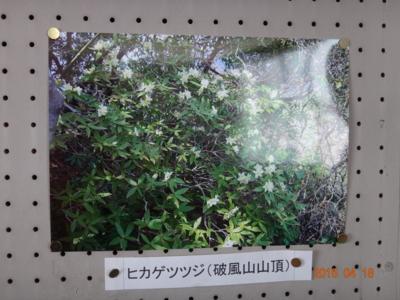f:id:hatekota810:20150418195138j:image