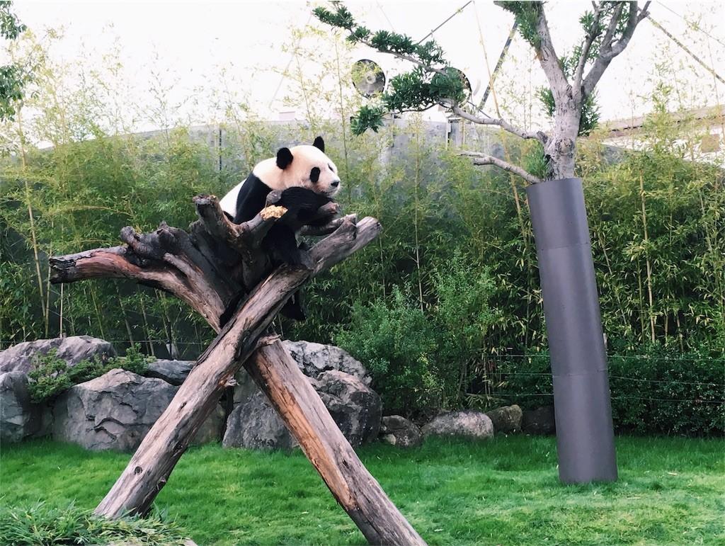 アドベンチャーワールドで見たパンダ
