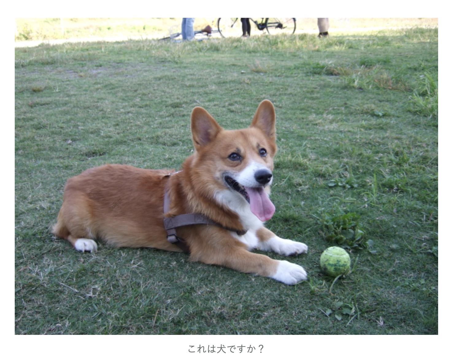 犬の画像を貼り付けた記事のスクリーンショット
