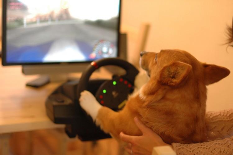 運転ゲームしなもん