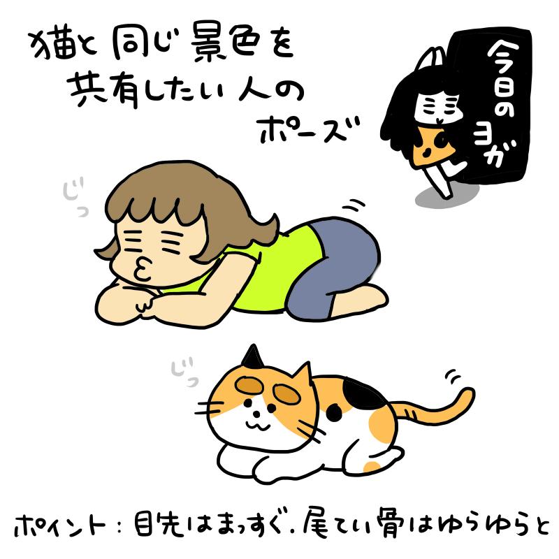 今日のヨガ:猫と同じ景色を共有したい人