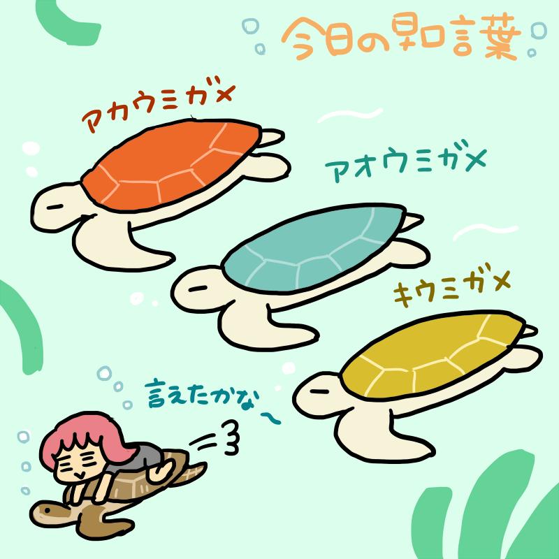 今日の早口言葉:ウミガメ