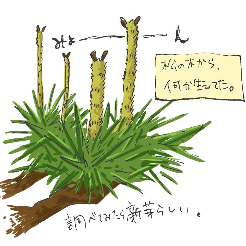 松の木からなんか生えてた