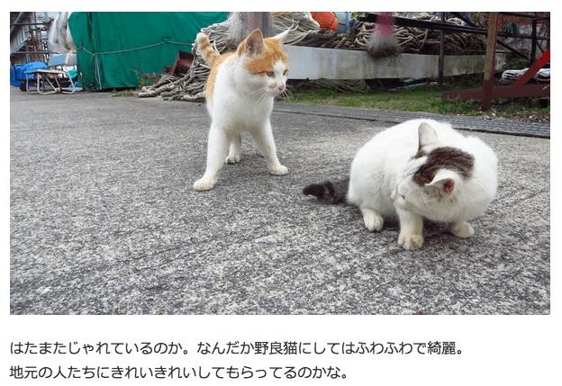 滋賀県沖島でねこあつめしてきた - さっきもUたやん