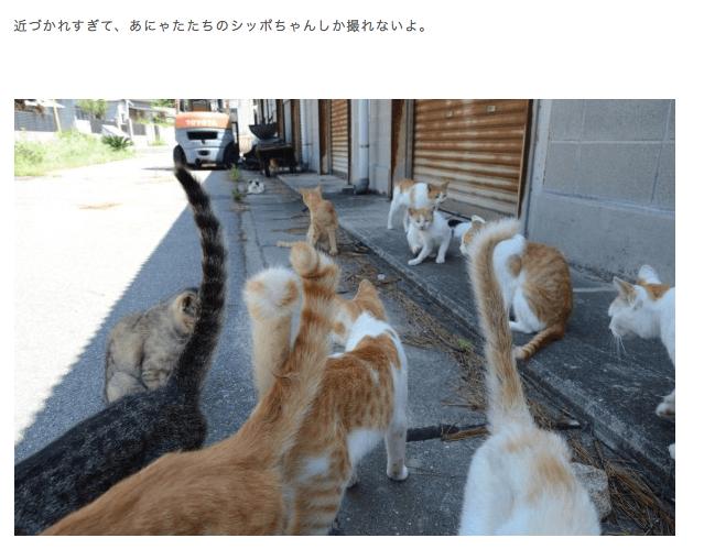 男木島:これぞ、猫島にゃり(スナップ) | にゃんトラベル
