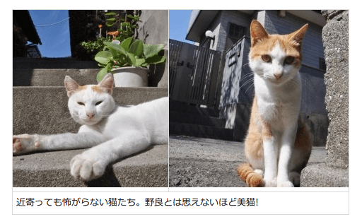 猫! ねこ!! ネコ!!! 瀬戸内海に「猫パラダイス」があった | マイナビニュース
