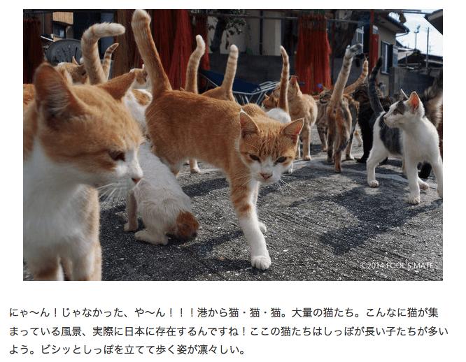 """【猫島】そこは本当に""""猫の楽園""""? 200匹の猫が暮らす愛媛・青島【写真満載】(1/4) - ウレぴあ総研"""