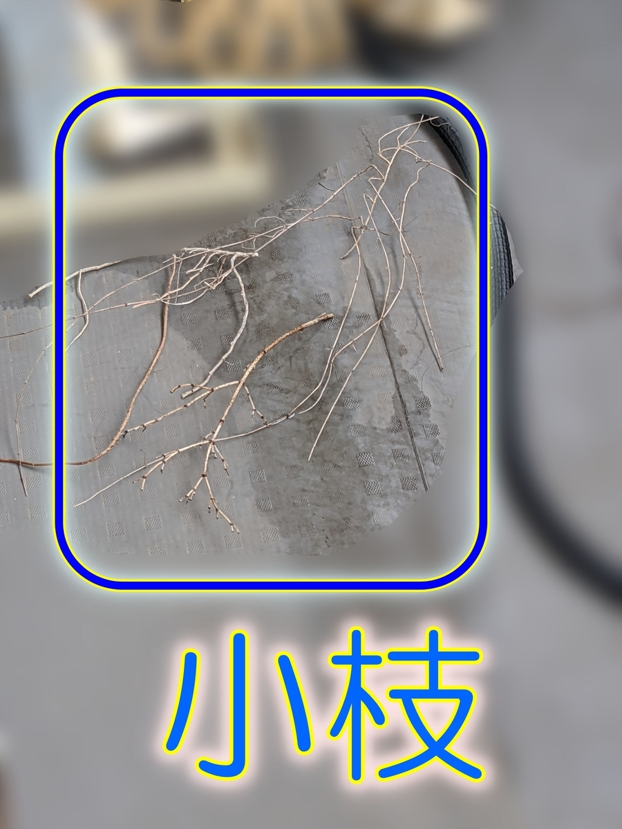 f:id:hatikinkun:20210405150314j:plain