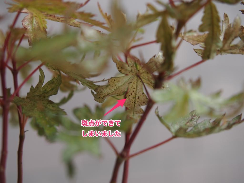 f:id:hato36:20160811101108j:plain