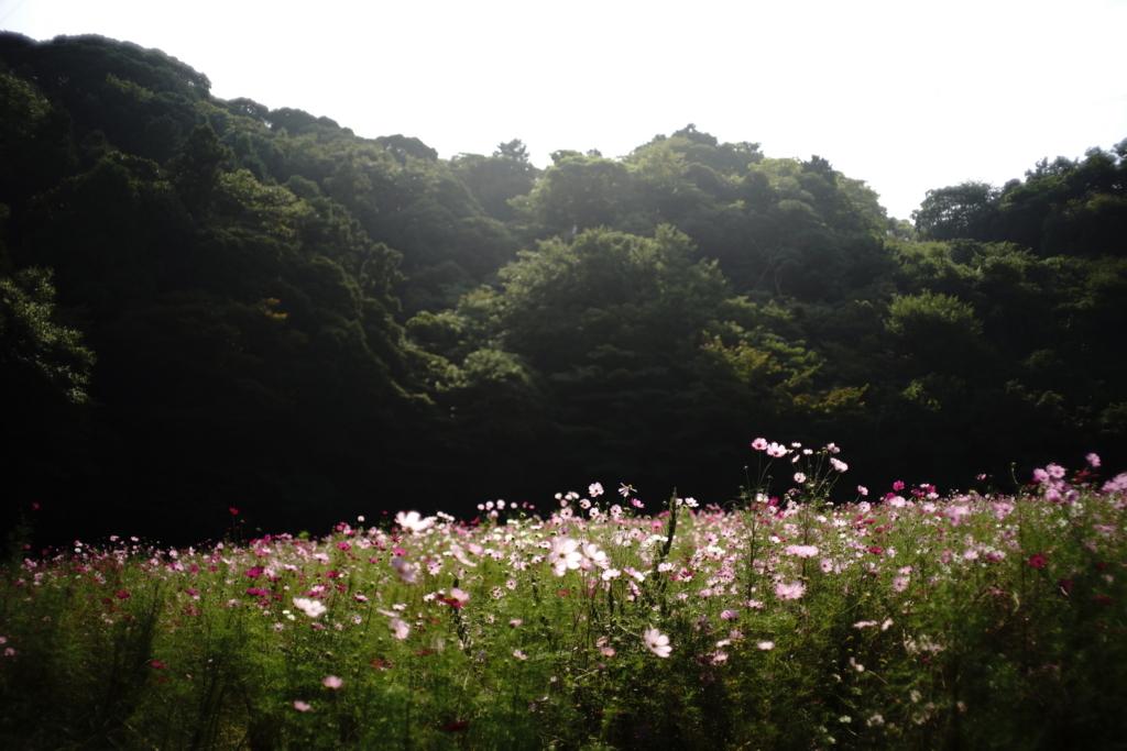f:id:hato36:20171008103242j:plain
