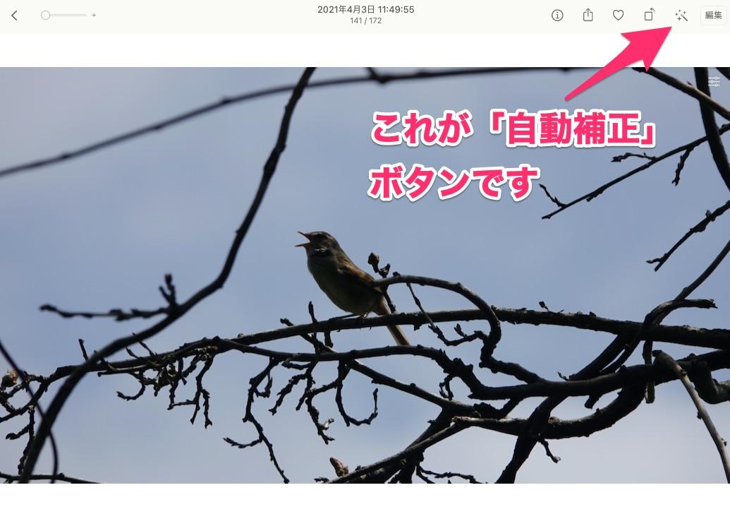 f:id:hato36:20210405144303j:plain
