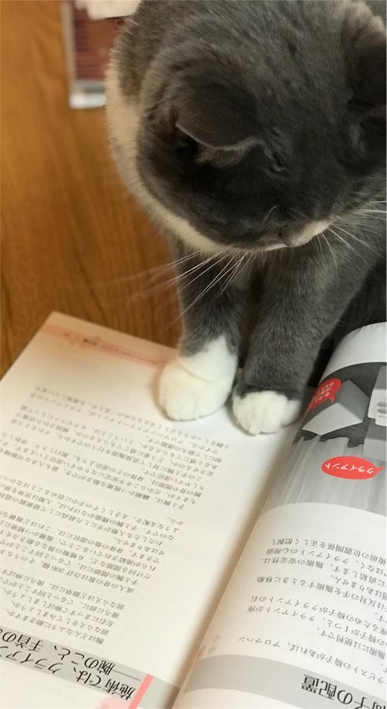 f:id:hatsuho44:20180827154630j:image