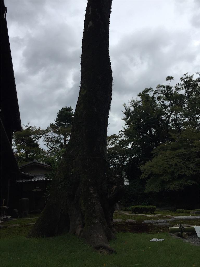 f:id:hatsuho44:20191120181857j:image