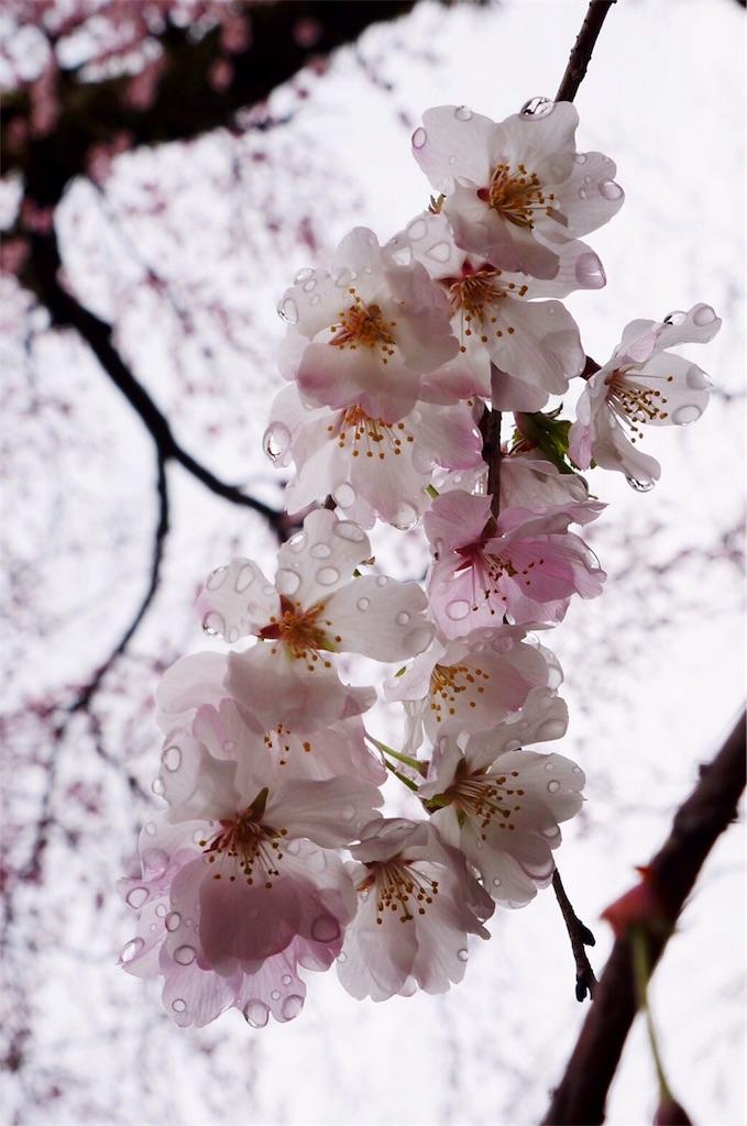 f:id:hatsuri888:20170410225915j:image