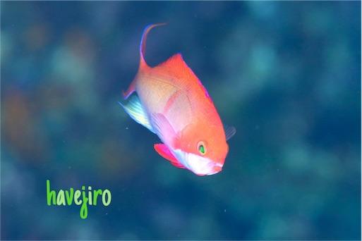 f:id:havejiro:20160801220748j:image