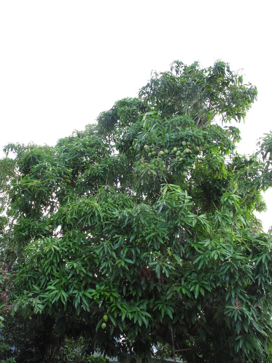 f:id:hawaii-ojisan:20200407160522j:plain