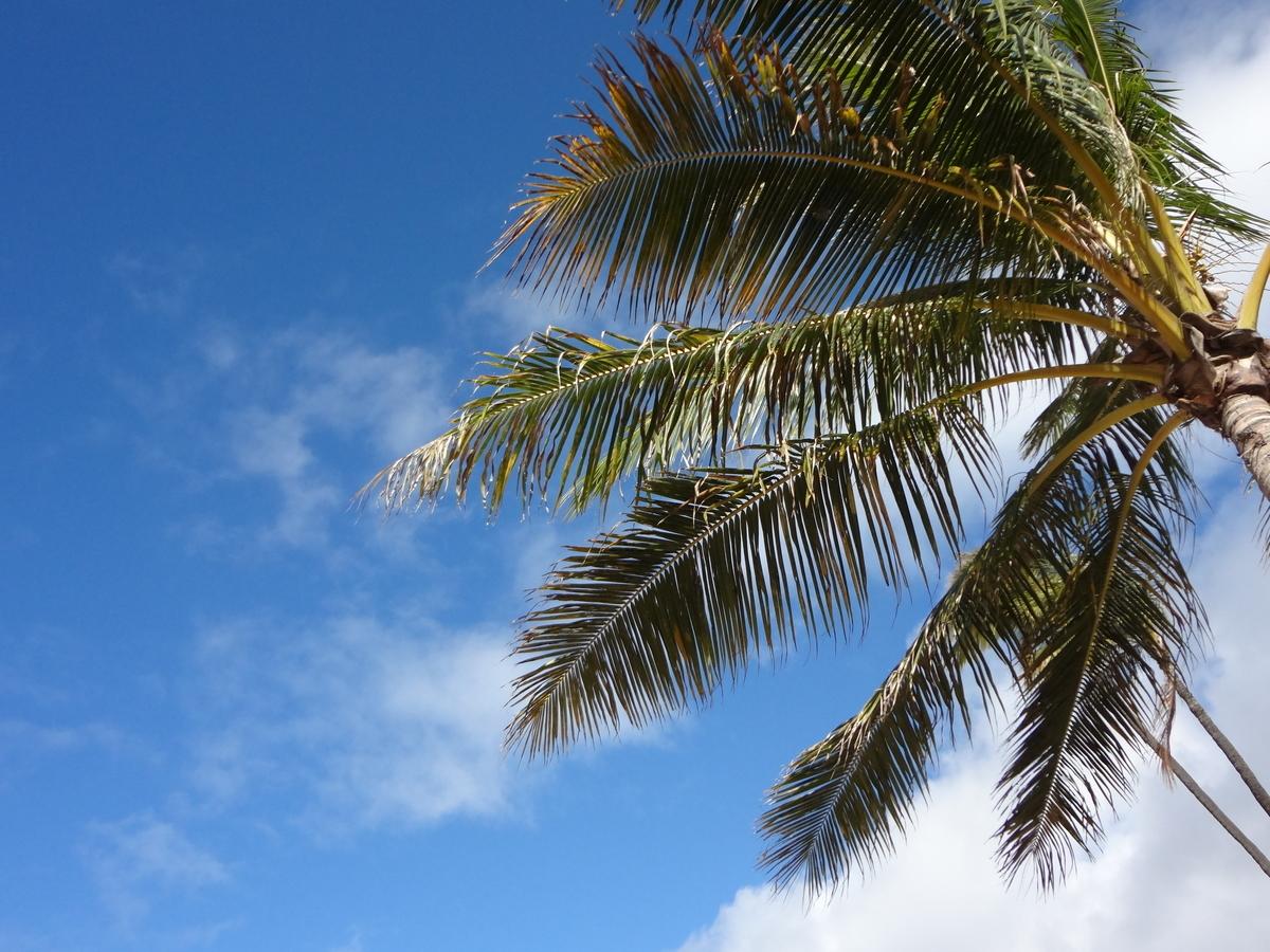 f:id:hawaii-ojisan:20200411193330j:plain
