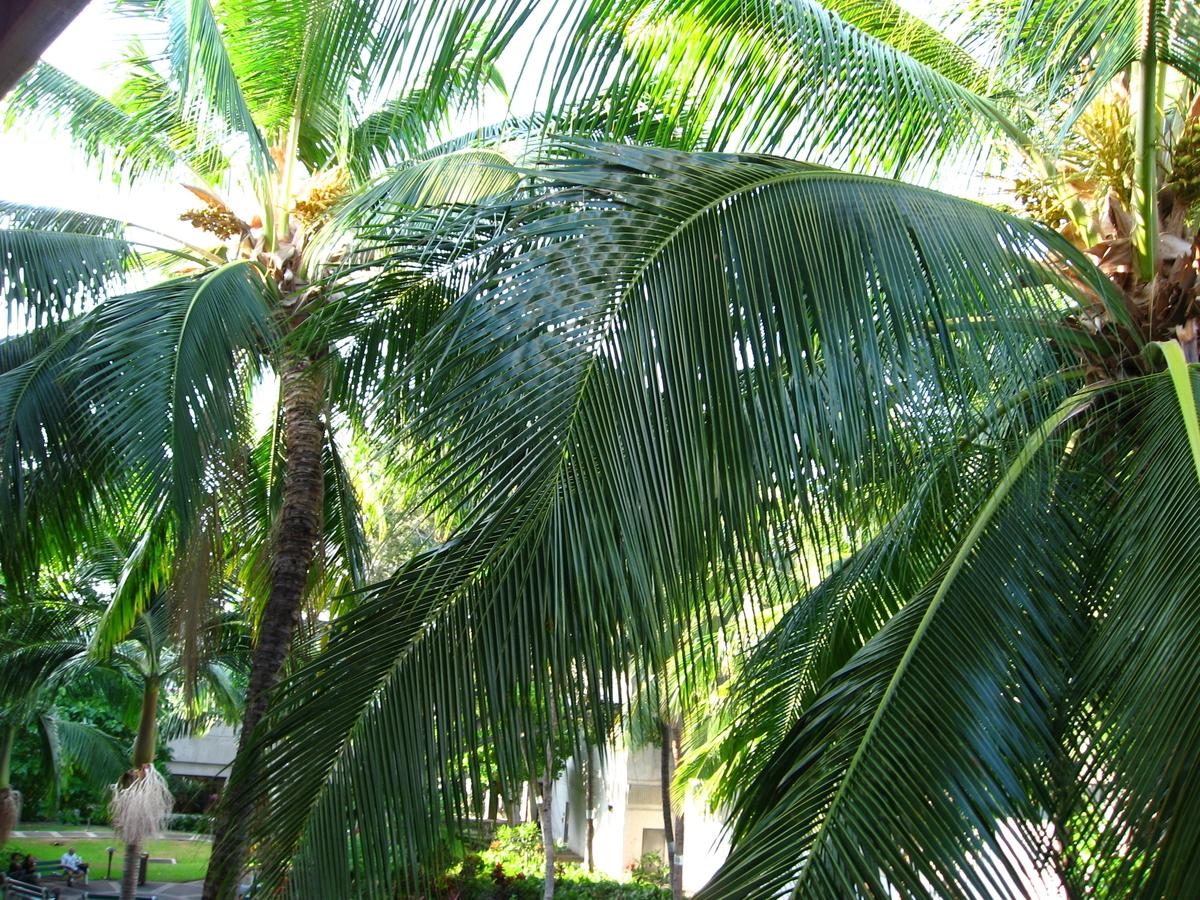 f:id:hawaii-ojisan:20200726072746j:plain