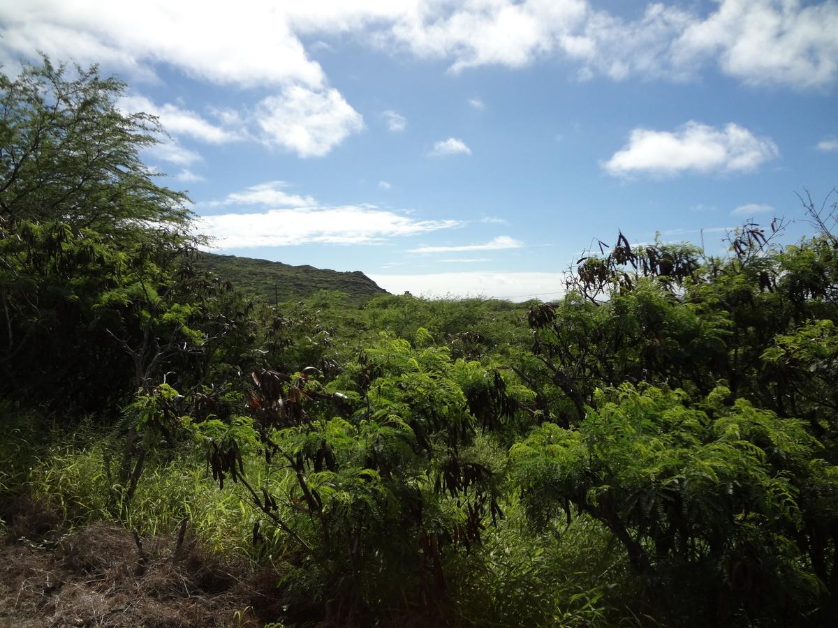 f:id:hawaii-ojisan:20200908062659j:plain