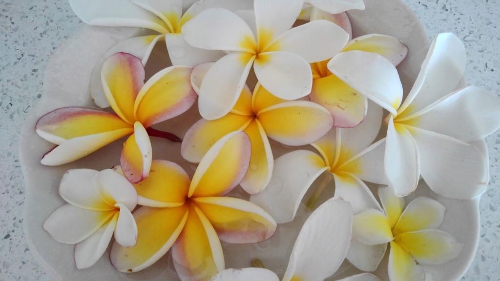 f:id:hawaiiphotogallery:20190216121214j:plain
