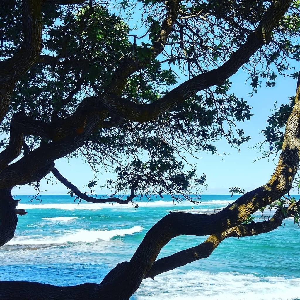 f:id:hawaiiphotogallery:20190216165104j:plain