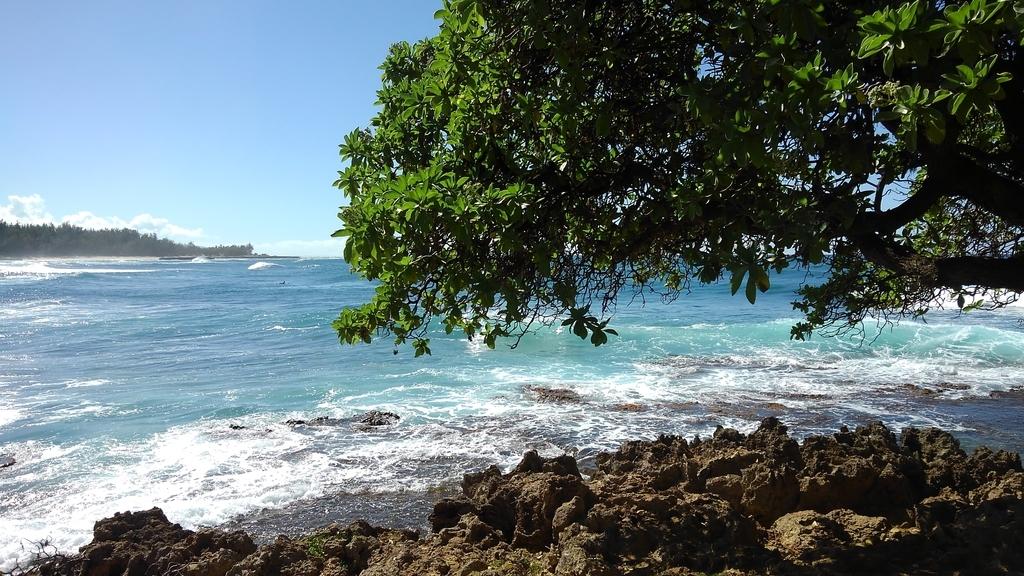 f:id:hawaiiphotogallery:20190217114720j:plain