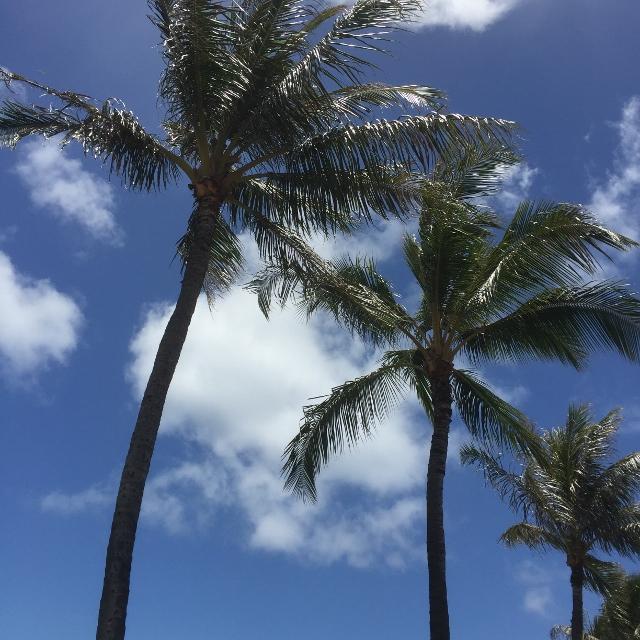 f:id:hawaiira-men:20190314104205j:plain
