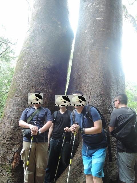 f:id:hawaiira-men:20190314140054j:plain