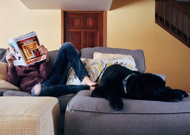 賃貸 ペット飼育 注意点