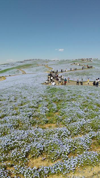 f:id:hayabusa-k:20210419200540j:plain