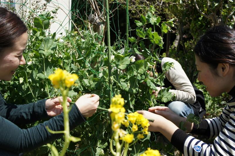 f:id:hayama-slowlife:20110412113038j:image:w350