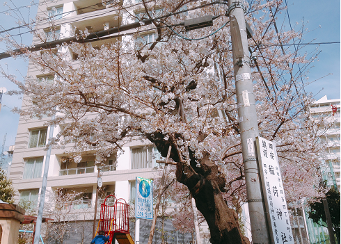 f:id:hayaokibitonamuu:20180401121258p:plain