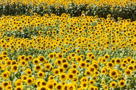 2012-08-25-11-05-49.jpg