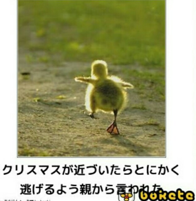 f:id:hayashi2011aw:20170204170707j:image