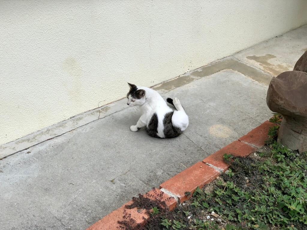 座間味島 猫