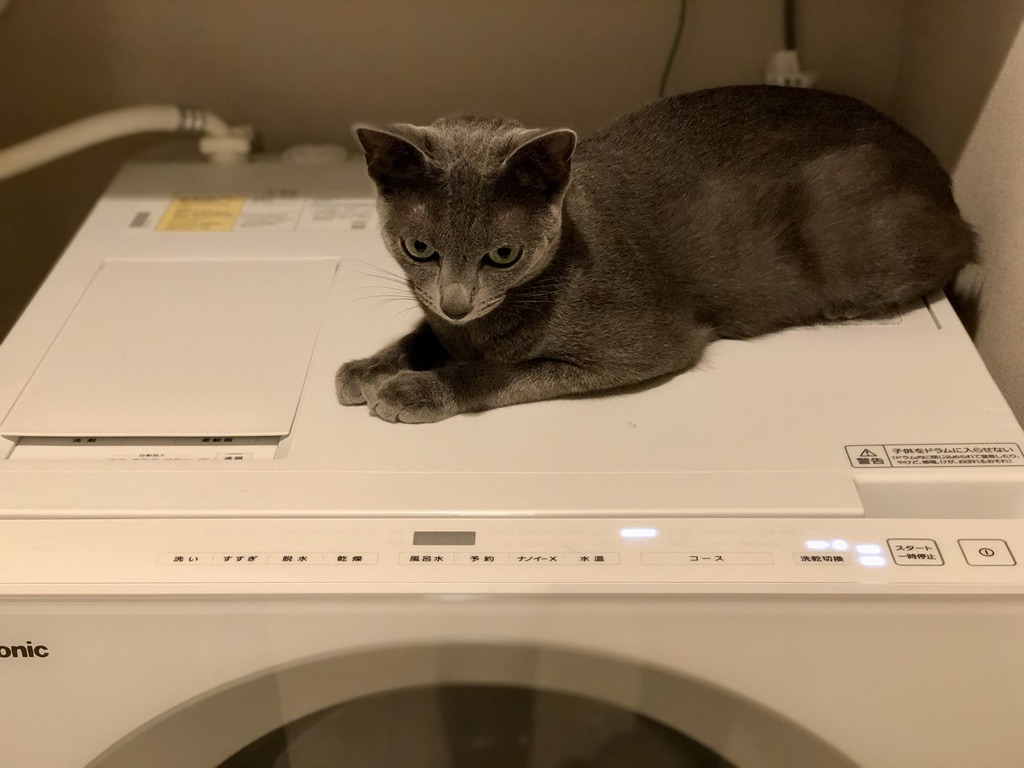 猫と洗濯機とホース