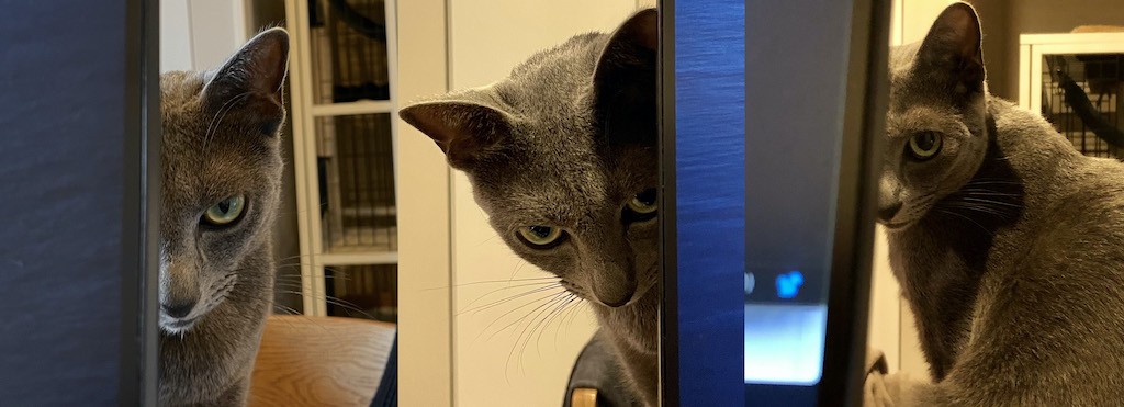 猫のプレッシャー