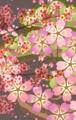 [桜][イラスト][フリー素材]