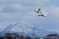 京都新聞写真コンテスト「伊吹の空へ」